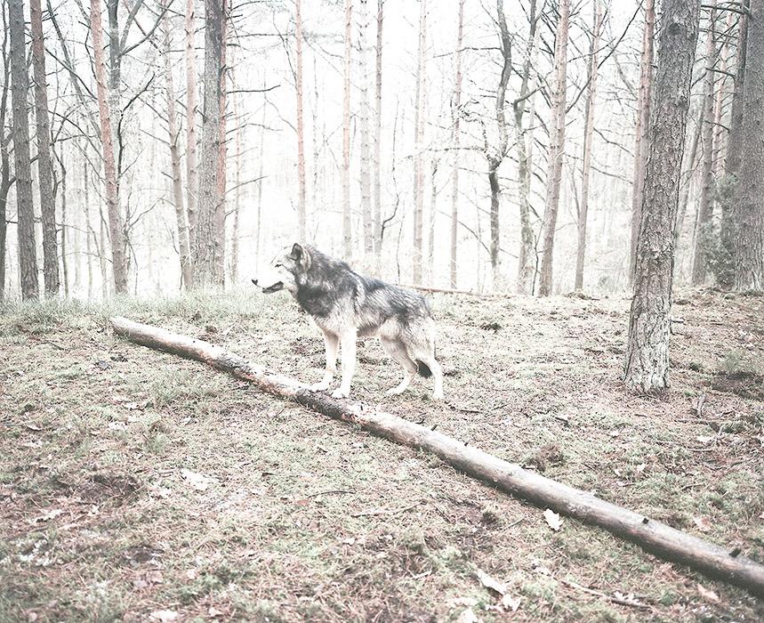 marta-berens-bajka-02