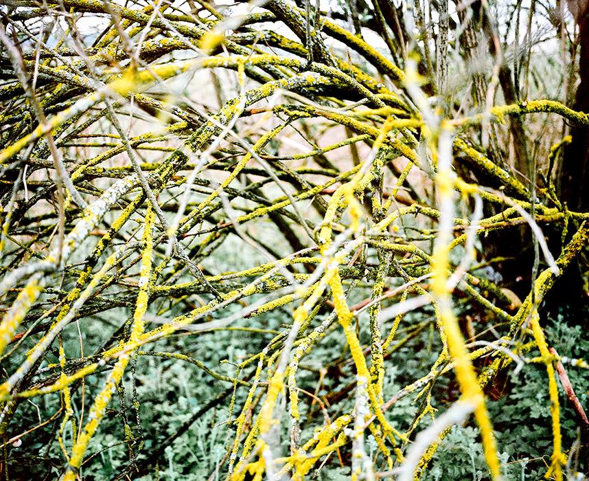 marta-berens-bajka-09
